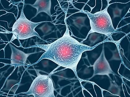 Illustration of nerve cells in brain