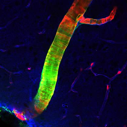 New Brain Cleaning System Discovered National Institutes