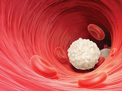 Illustration of a white blood cell (lymphocyte) in the bloodstream.