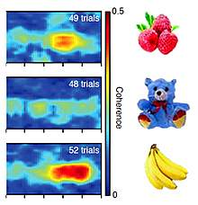 Plots showing intense red for a banana, less for raspberries and none for a stuffed bear.
