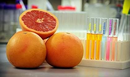 Grapefruit in a lab.