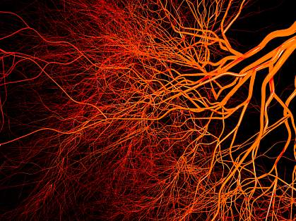 Complex, branching blood vessels.