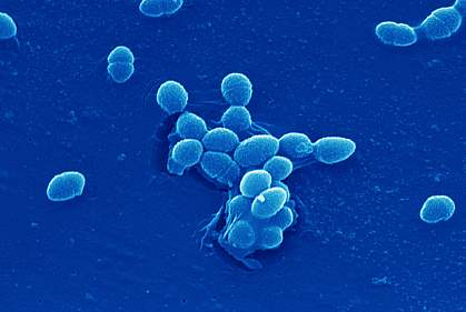 A group of bacteria