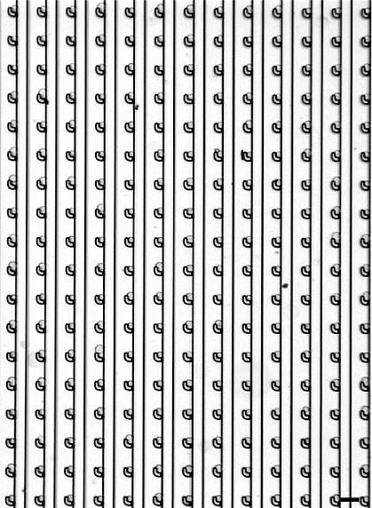 Image of cells in a grid pattern.