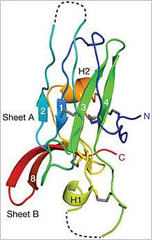 Protein structure.
