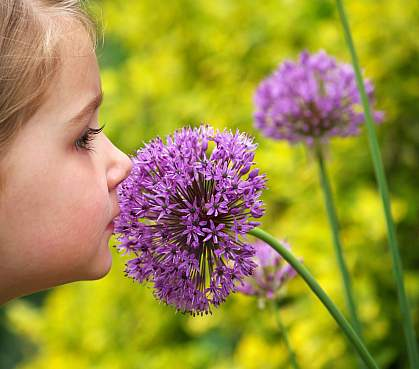 Young girl smelling a purple allium (alliaceae) flower.