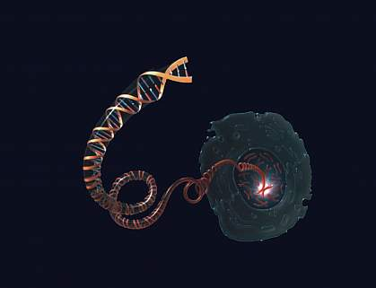 Drawing of DNA molecule unwinding from a chromosome inside the nucleus of a cell.