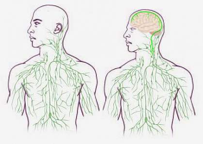 Maps of the lymphatic system.
