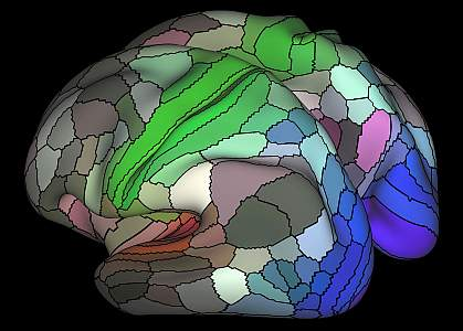 Illustration of human brain cortex.