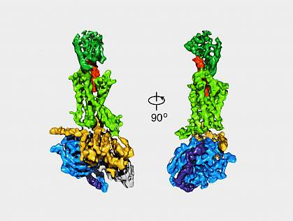 Views of the GLP-1 receptor