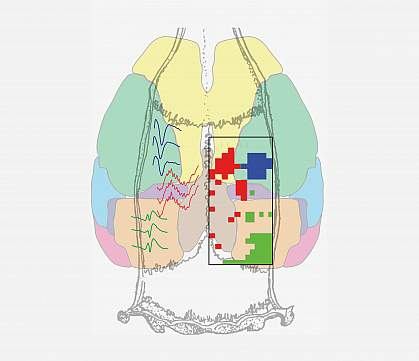 Anatomical map showing sample ripple traces color coded by brain region.