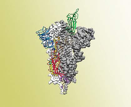 SARS-CoV-2 spike protein