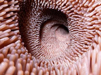 3d illustration of villi in the intestine