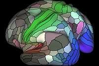 Illustration of human brain cortex.