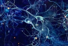 Neurons cells concept - stock photo