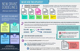 Grant Guidelines Infographic.