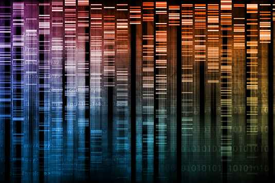 Researchers analyze DNA to study the molecular features of diseases.