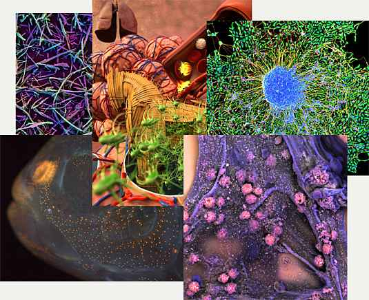 Collage of NIH funded research images.
