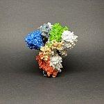 Novel Coronavirus SARS-CoV-2 Spike Protein