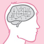 Circuits in the brain.