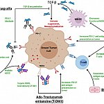 Immunotherapy agents