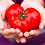 Hands holding a heart shaped tomato.