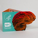 NIDA's Drugs & the Brain Wallet Card