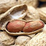 An open peanut shell.