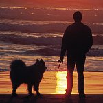 Silhouettes of a man and dog on a beach during sunset
