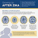 Infographic: Growing Up After Zika