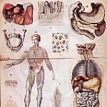 Old medical illustrations.