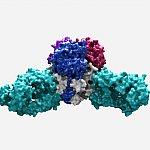 Lassa virus structure