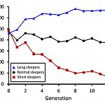 graph showing sleep duration of fruit flies