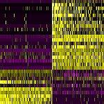 Scan of gene activity in the brain