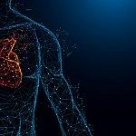 Illistration of a heart in body.Illistration of a heart in body.
