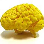 Illustration of human brain