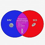 Overview of SCD and HIV Cures Collaboration thumbnail