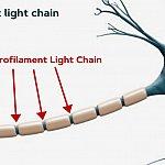 Illustration of neurofilament light chain