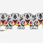Images of brain scans used in the study