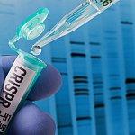 CRISPR research in laboratory - stock photo
