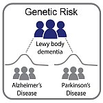 Graphic depicting genetic overlap between Lewy body dementia with Alzheimer's and Parkinson's diseases