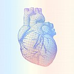 human heart wireframe on soft colorful gradient BG - stock vector
