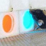 A row of one blue and two orange panels, with a mouse touching the blue panel