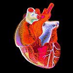 Digitally enhanced photograph of a human heart