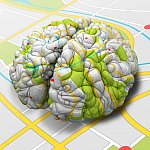 Illustration of a brain sitting on, and wrapped with, a road map.