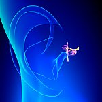 Illustration of inner ear anatomy