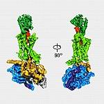 Views of the GLP-1 receptor