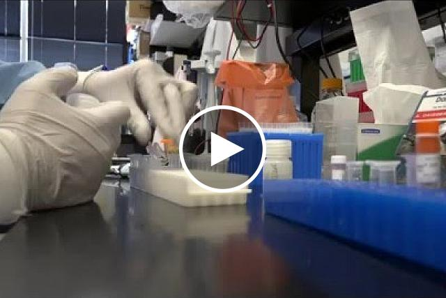 NIAID B-roll of Zika virus research activities. Includes footage of scientists conducting Zika virus research at the NIAID Vaccine Research Center (VRC), exterior shots of the VRC, and footage of Aedes aegypti mosquitoes.