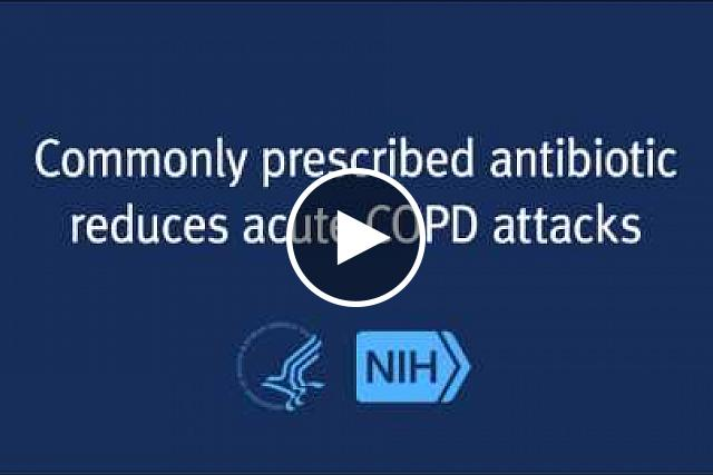 An NIH-funded study has found that a commonly prescribed antibiotic lowers the frequency and severity of chronic obstructive pulmonary disease (COPD) flare-ups. The study results, which appear in the New England Journal of Medicine, show azithromycin may reduce the burden of COPD and improve the quality of life for patients.