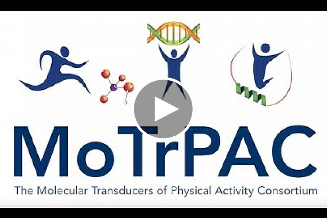 Watch Astronaut Dr. Peggy Whitson explain the importance of understanding exercise and The NIH Common Fund's Molecular Transducers of Physical Activity in Humans Consortium (MoTrPAC). The MoTrPAC program is a trans-NIH effort managed by the NIH Common Fund in the Office of the Director and supported by several Institutes & Centers including, NIAMS, NIA and NIDDK.